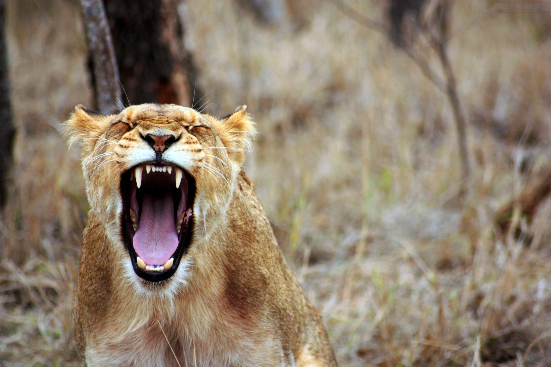 Vrede der skader dine kære. Få online hjælp under corona virussen